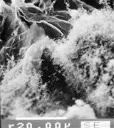 сканирующая электронная микроскопия: поверхность  частиц ТРГ